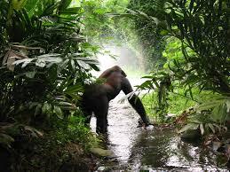 gorila-en-la-selva