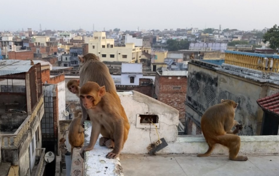 animales en la ciudad